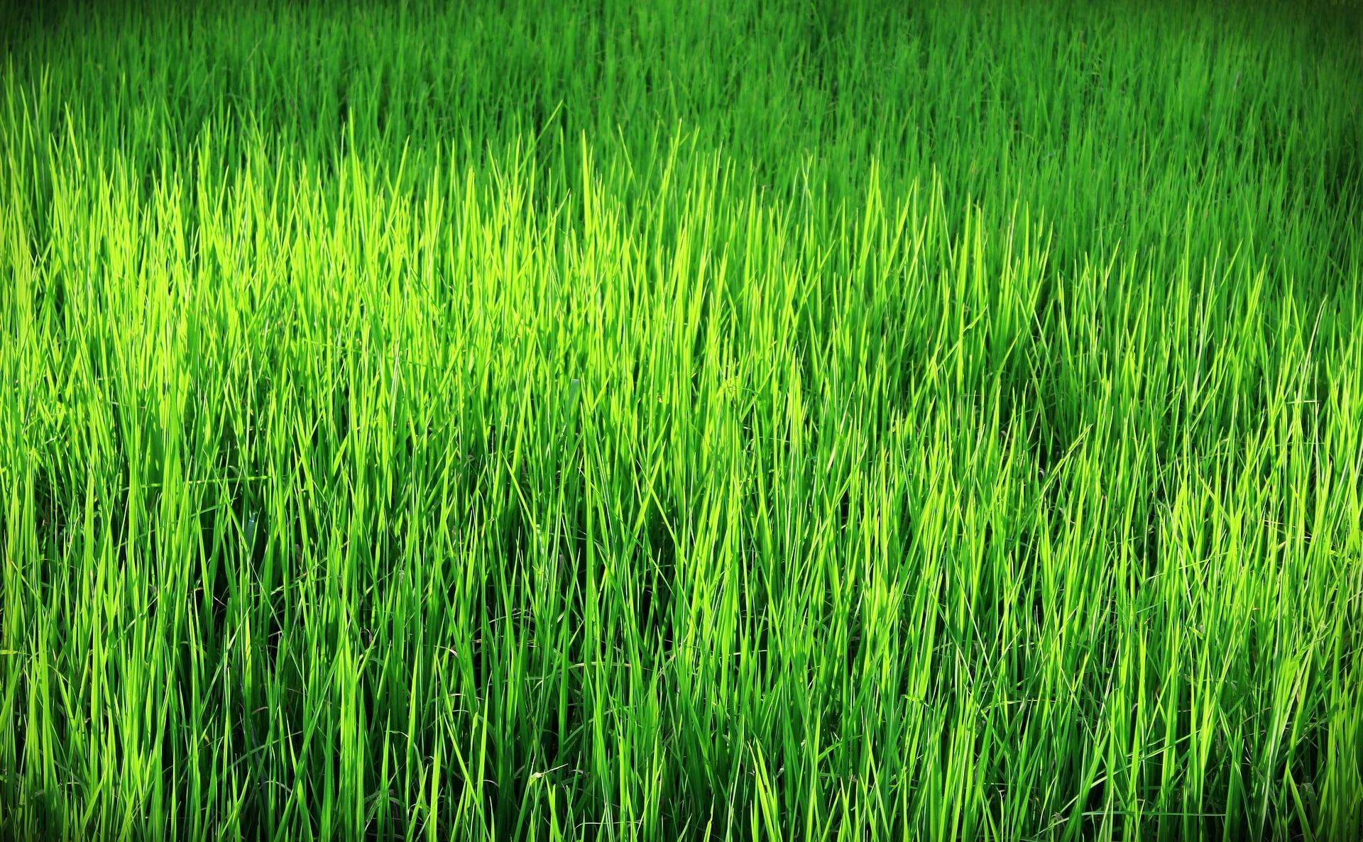 GREEN ECONOMY E NOLEGGIO OPERATIVO DOMORENTAL: IL CAMBIAMENTO PER RIPARTIRE